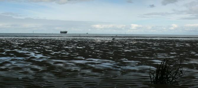 Das Wattenmeer: Erleben Sie Natur pur!